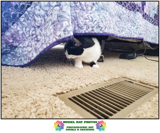Olivia under the bed