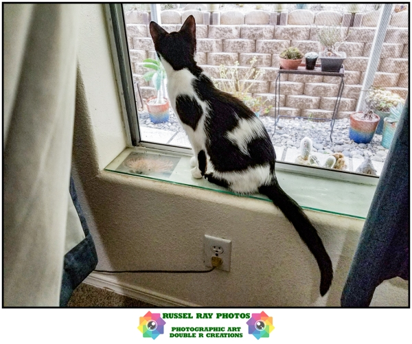 Olivia on a window sill watching a rabbit