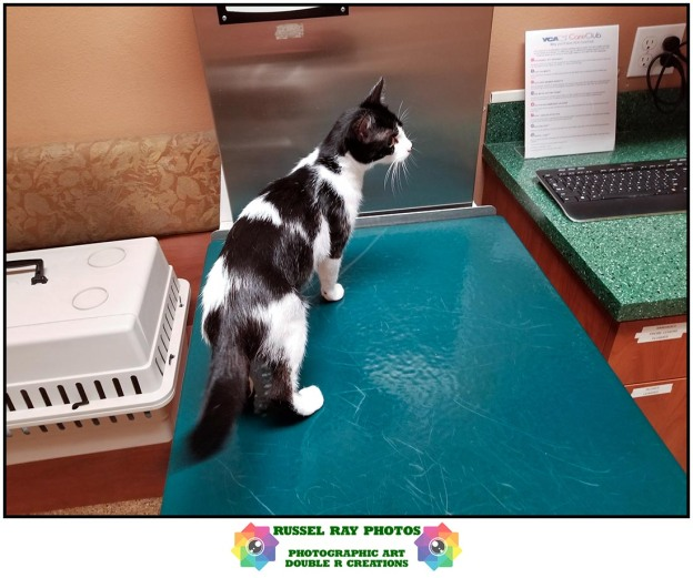 Olivia's first visit to the vet on July 3, 2019