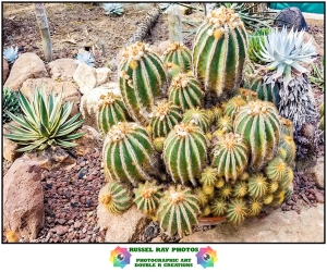Cover picture for 2020 cactus & succulent calendar