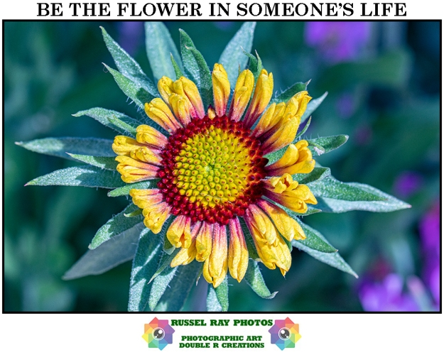 Be the flower in someone's life