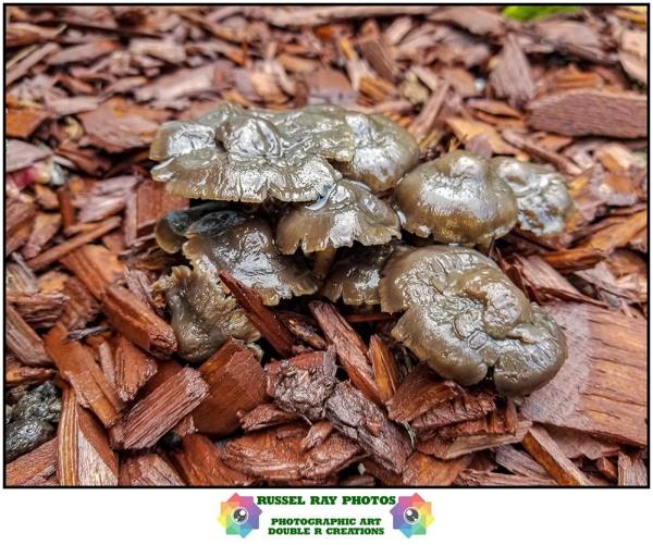 Ugly mushrooms
