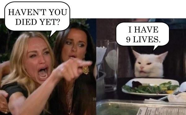White cat meme